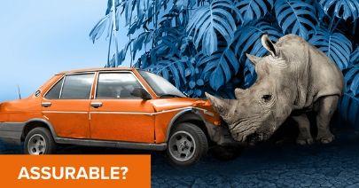 facebook_post-safari_v2.jpg
